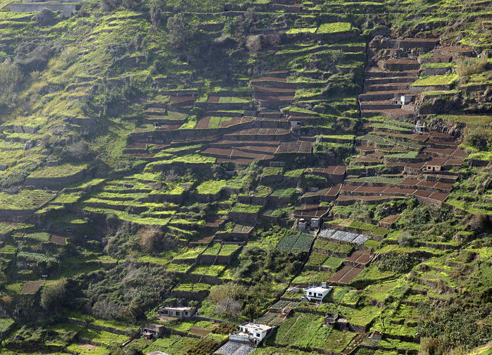 Terrasserade odlingar, Madeira