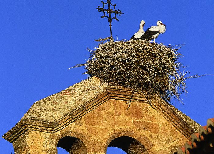 Storkar i Extremadura